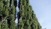 Stromy po 7. měsících