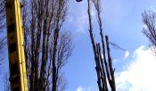 Kácení a průklesty stromů